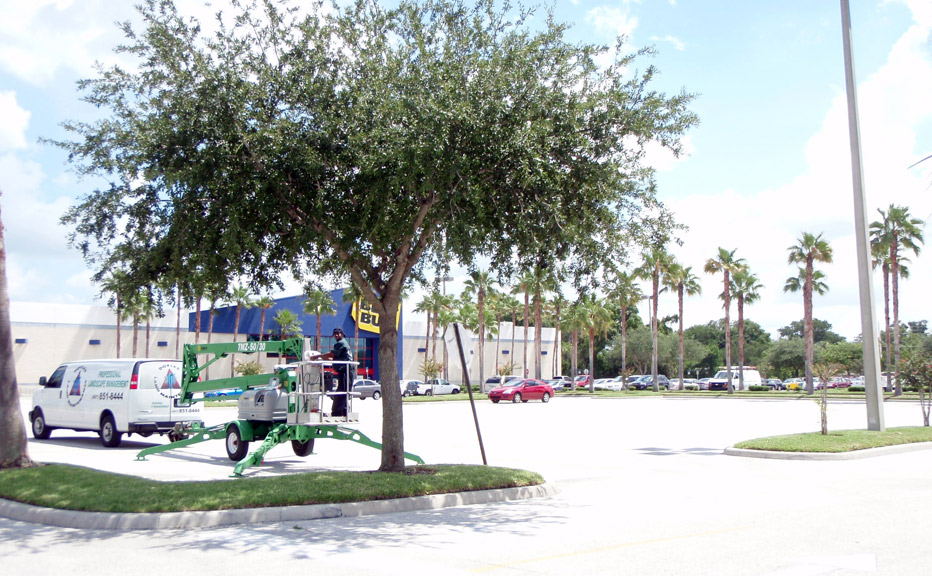 Best Buy Tree Maintenance